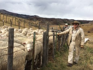 Joe Sperry and his Polypay Sheep