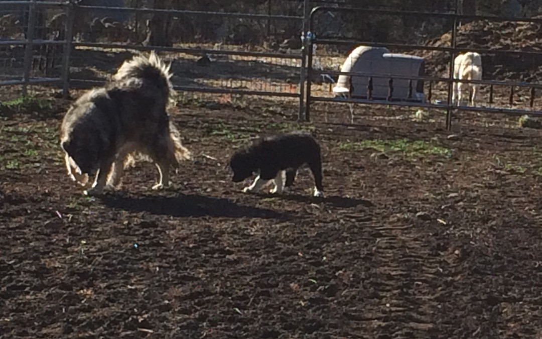 Sofia Meets the Other Dogs