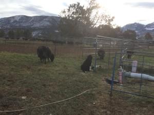 Sofia and the Ewes