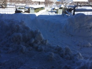 Starting to dig out the aisle so we can feed the ram lambs.
