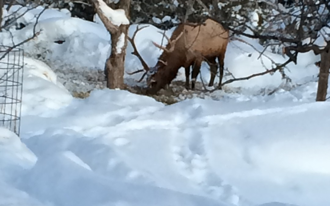The Elk are Down